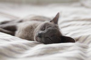 睡眠です。