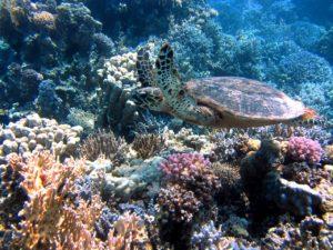 SDGs ウミガメと海洋プラスチックごみと