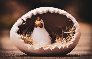 ニワトリと卵の親子です