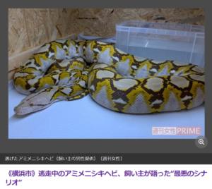 横浜 ニシキヘビ 逃走