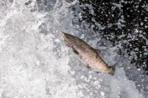 水を得た魚です