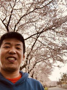 出見世と桜です。