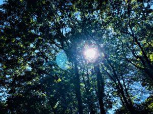 木洩れ日です