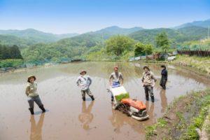 田んぼ 米 稲刈り