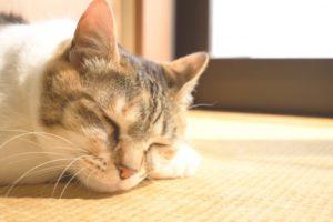 猫 居眠り