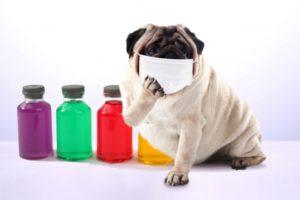 マスクをした犬です