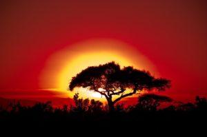 アフリカの夕日です